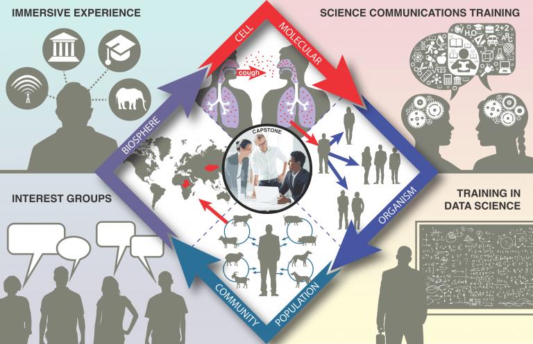 illustration: IDEAS program (research, training, coursework, professional development, etc)